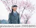 제복의 소녀와 사쿠라 봄 29956693