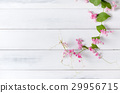 Mexican Creeper pink flower on white wood  29956715