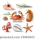 Set of vector illustrations seashells, coral, crab 29960843