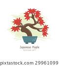 Vector illustration of Bonsai Tree . 29961099