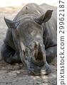 Rhino head shot in public zoo. 29962187