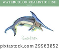 สีน้ำ,ปลา,เวกเตอร์ 29963852