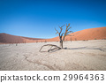 Dead tree in Sossusvlei desert. 29964363