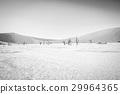 沙漠 蘇絲斯黎 樹木 29964365