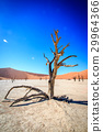 Dead tree in Sossusvlei desert. 29964366