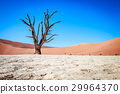 Dead tree in Sossusvlei desert. 29964370