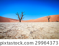 Dead tree in Sossusvlei desert. 29964373