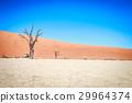 desert sossusvlei tree 29964374