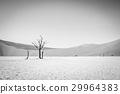 沙漠 蘇絲斯黎 樹木 29964383