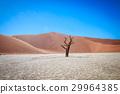 Dead tree in Sussusvlei desert. 29964385