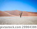 Dead tree in Sossusvlei desert. 29964386