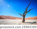沙漠 蘇絲斯黎 樹木 29964389