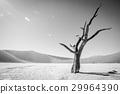 沙漠 蘇絲斯黎 樹木 29964390