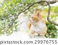 고양이, 동물, 포유류 29976755