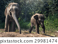 Mother elephant with baby 29981474