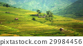 Beautiful landscape terraced rice field 29984456