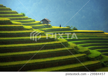 Rice fields on terraced in rainny season  29984457