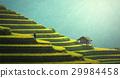 Rice fields on terraced of Mu Cang Chai 29984458