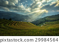 Rice fields on terraced of Mu Cang Chai 29984564