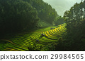 Rice fields on terraced of Mu Cang Chai 29984565