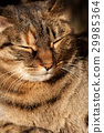 Relaxed cat 29985364
