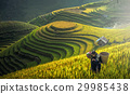 Mother and Daughter Hmong, working at rice terrace 29985438