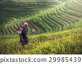 Mother and child Hmong, working at rice terraces 29985439