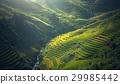 Beautiful view of rice terrace at Mu Cang Chai 29985442