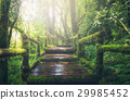 Wooden bridge in tropical rain forest 29985452