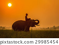 Elephant are a happy on field with bulldozers  29985454