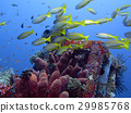 coral reef alive with marine life and fish, Bali 29985768