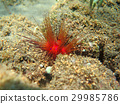reef alive with marine life and shoals fish, Bali 29985786