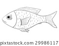 Fish. Outline doodle 29986117