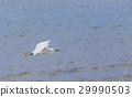 Egret flying over beach and waves, and blue sky 29990503