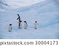 企鵝 30004173