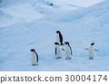 企鵝 30004174