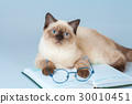 Cute clever cat with glasses, lying on the book 30010451