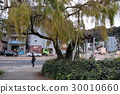 hiroshima prefecture, hiroshima city, heiwa oodori 30010660