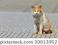 Dirty cat 30013952