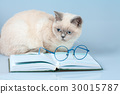 Cute business cat with glasses, lying on the book 30015787