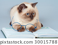 Wise cat with glasses, lying on the book 30015788