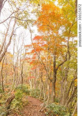 Kunigamiyama in autumn 30015872
