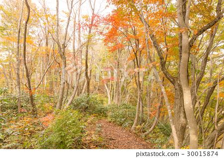 가을 国上山 30015874