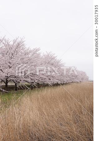 春天的景色 30017935