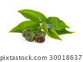Tea ,Camellia sinensis  leaves  on white  30018637