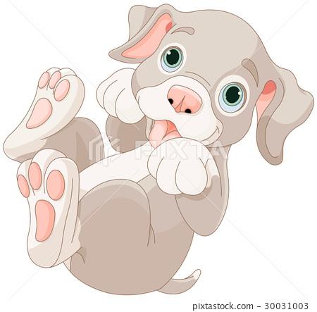 Cute puppy 30031003