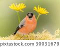 nature, animal, sun 30031679