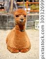 羊駝 嬰兒 寶寶 30032699