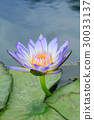 Close up of water-lily 30033137