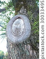 tree, annual ring, annual tree ring 30033495